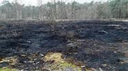 Natuurpunt gaat op zoek naar brandstichter(s) die tien are heide in de as legde