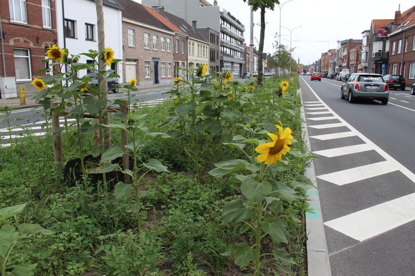 Een gele zonnebloem is zowat het enige fleurige in het project. Voorlopig dan toch.