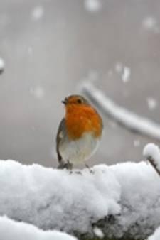 Het sneeuwt in het Groene Hart!