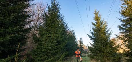 Deze kerstboom uit het Kuinderbos mag nog één keer pronken bij de Tweede Kamer
