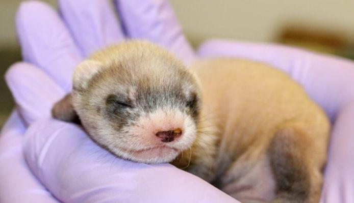 Elizabeth Ann werd geboren op 10 december.