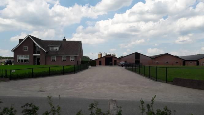 Oisterwijk houdt licht voor varkens op oranje