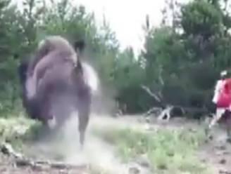 """""""Dit gebeurt wanneer je rotzooit met wilde dieren"""": bizon slingert meisje (9) de lucht in"""