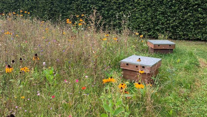 Popin plaatste in samenwerking met Honeybeez twee bijenkasten op het bedrijventerrein Sappenleen.