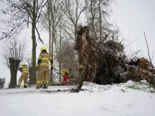 Grote boom bezwijkt onder sneeuwval en valt om in Zevenaar