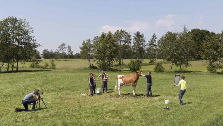 De koeienfotograaf staat tijdens de fotoshoot schuin achter de koe, zodat er nog iets van de uier te zien is. Beeld null