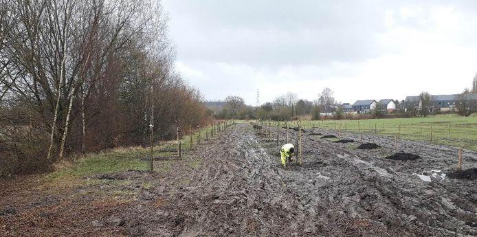 Des arbres fruitiers ont été plantés par IGRETEC à Charleroi et dans sa région