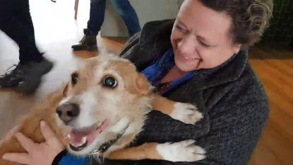 Vermist Antwerps hondje teruggevonden in… Amsterdam