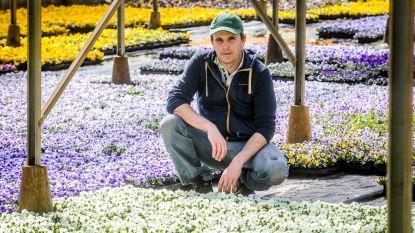 """Plantenkwekers smeken om heropening: """"Al 130.000 viooltjes moeten weggooien. Moeten we straks ook 1 miljoen geraniums in de vuilbak kieperen?"""""""