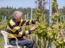 Vorst voorbij, dus snoeien in de Elster wijngaard Tussen Rug en Rijn
