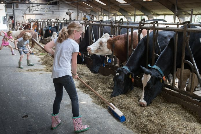 Kinderen helpen bij het voer vegen. Het is overigens geen verplichting om te helpen. Alles mag, niets moet.