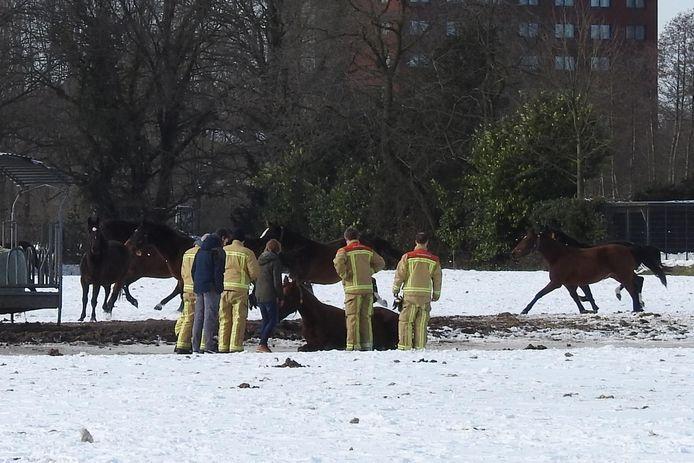 De brandweer helpt het paard.