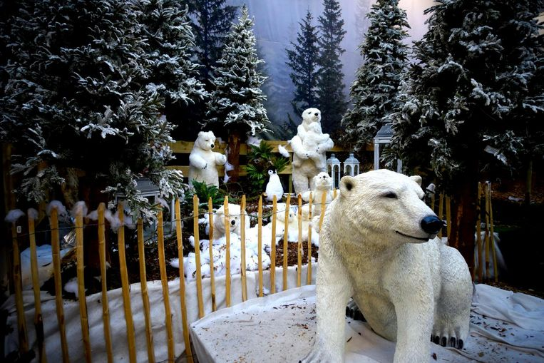 Kerstgekte bij Tuincentrum Osdorp. Beeld -