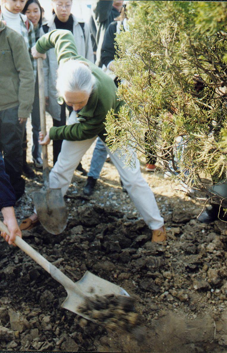 Normaal was Goodall in maart bomen komen planten samen met de mensen van het Jane Goodall Institute Belgium, een van de dertig internationale organisaties die haar naam dragen. Beeld RV