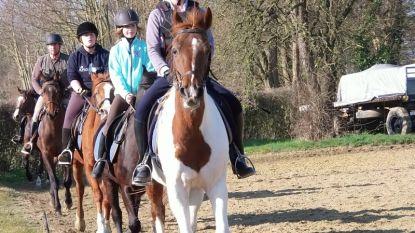 Manège Sint-Jorishoeve Bunsbeek krijgt kwaliteitslabel als jeugdsportclub