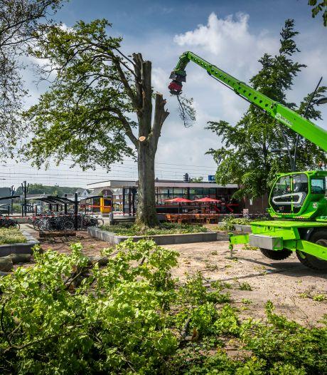 Kappen met 'zo maar' kappen in Deurne: inwoners willen strengere regels voor omzagen van bomen