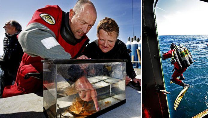 Links: Bioloog Peter van Bragt met zijn aquarium vol aansprekende vangsten. Rechts: een duiker springt het water in.