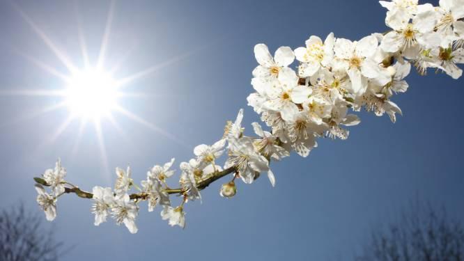 Lente in het land: zonnig en zacht begin van de week met temperaturen tot 19 graden
