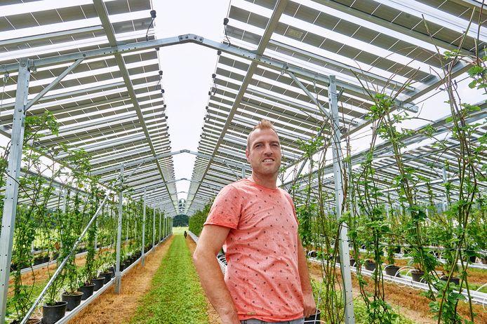 Fruit- en aspergekweker Maarten van Hoof uit Olland heeft zonnepanelen boven zijn gewassen die tevens als paraplu dienen.