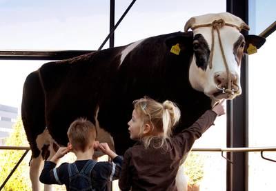 biotechbedrijf-gaat-nazaten-van-wereldberoemde-stier-herman-(1990-2004)-melken-voor-corona-medicijn
