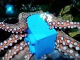 Octopus wordt verwend met cadeau in Sea Life