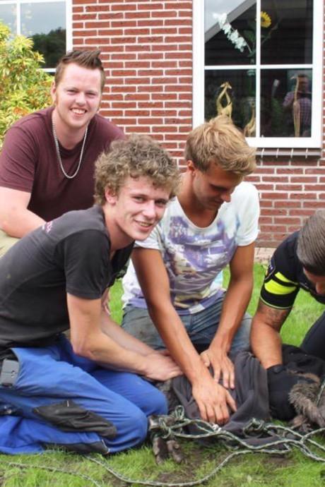 Ontspoorde kangoeroe bij Staphorst met lasso gevangen