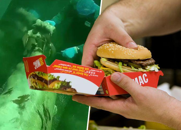McDonalds verbrak de samenwerking met slachterij Gosschalk nadat beelden van dierenmishandeling naar buiten kwamen.