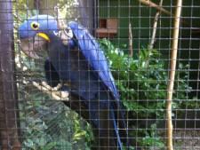 Brabander moet cel in vanwege illegale handel in gestolen, beschermde vogels van  Zoo Veldhoven en Best Zoo