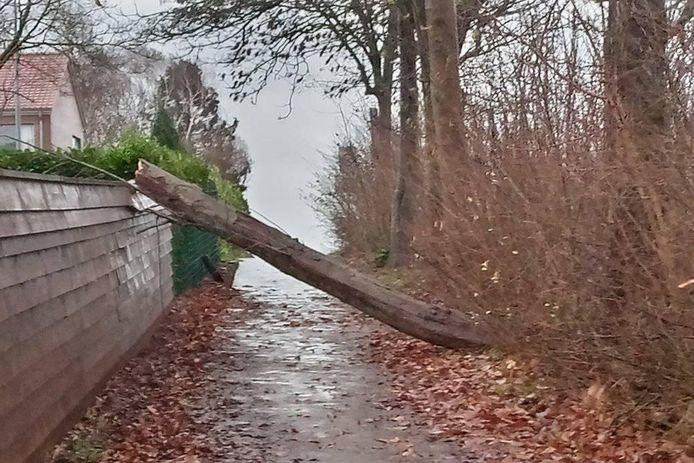 In Groendal in Mere kwam een boom over een wegeltje te liggen.