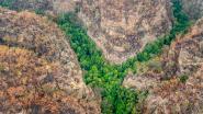 Australische brandweer redt in het geheim tweehonderd prehistorische bomen