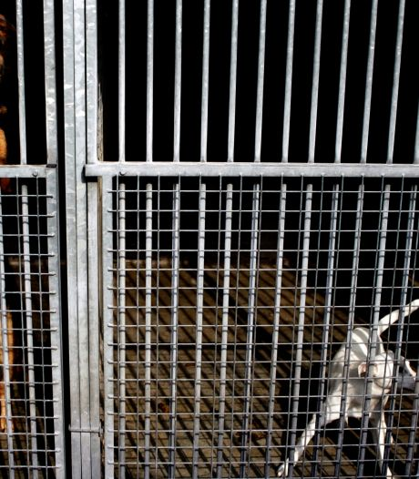 Amsterdams asiel krijgt dagelijks 'coronahuisdieren' terug