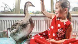 Werelddierendag: 3 jonge baasjes vertellen over hun bijzondere huisdieren