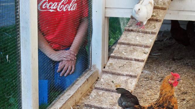 Vakantiegangers dumpen dieren bij kinderboerderij