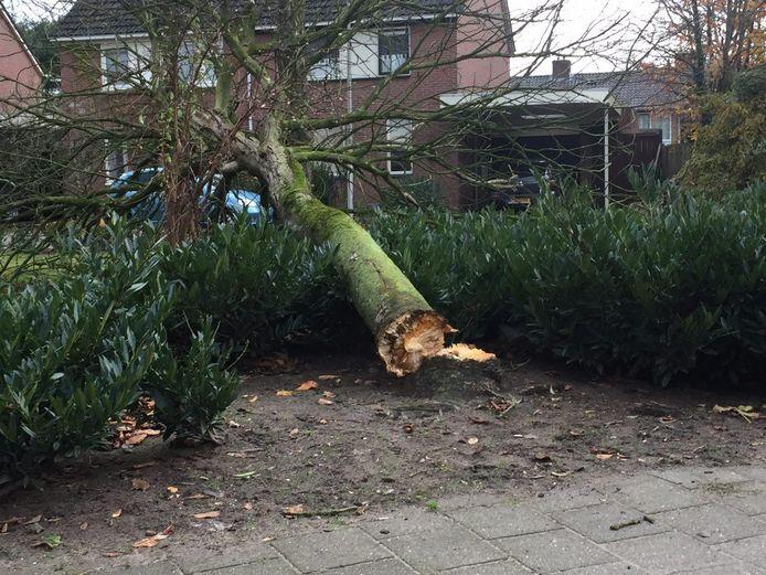 Een boom in de Isaacstraat in Hengelo is geknakt en omgevallen door de wind. Foto: News United/Jack Huygens