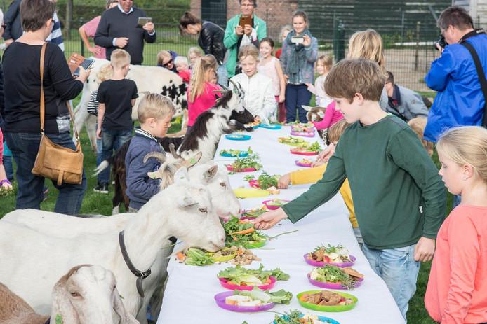 De geiten bij Buitenwereld krijgen een speciale lunch geserveerd tijdens een evenement in 2016.