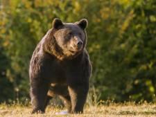Steenrijke politicus uit Rusland schiet onschuldige man dood 'die hij aanzag voor bruine beer'