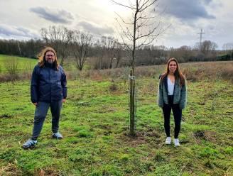 N-VA Halle stelt herdenkingsbos voor om coronaslachtoffers te eren