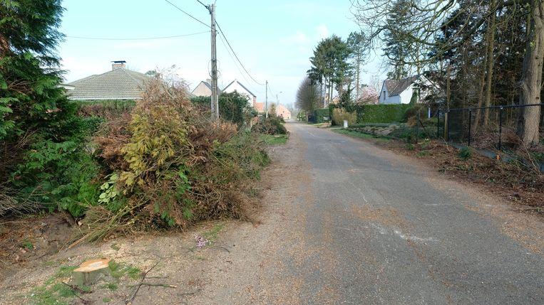 Een groot stuk van de bomen zijn intussen al omgehakt in de wijk Sint-Martinus.