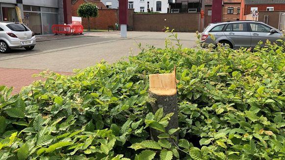 Deze boom aan het Krügercentrum werd slachtoffer van de fietser met de kettingzaag.