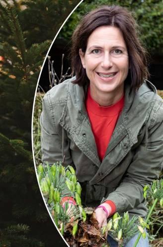 """Een echte kerstboom kopen? Onze tuinexperte vertelt waar je moet op letten: """"Grootte maakt amper verschil in naalduitval"""""""