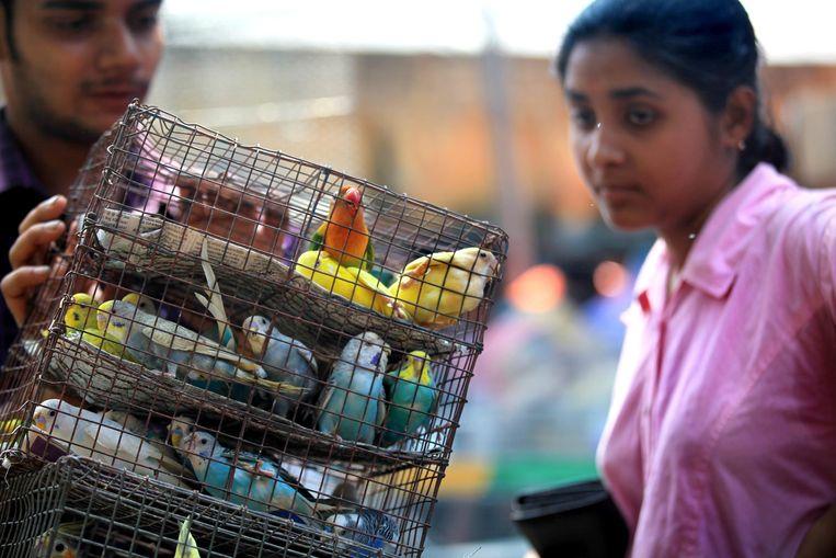 Een huisdierenmarkt in Calcutta, India.De internationale handel in exotische huisdieren zoals reptielen, papegaaien, knaagdieren en vissen baart virologen grote zorgen. Beeld EPA