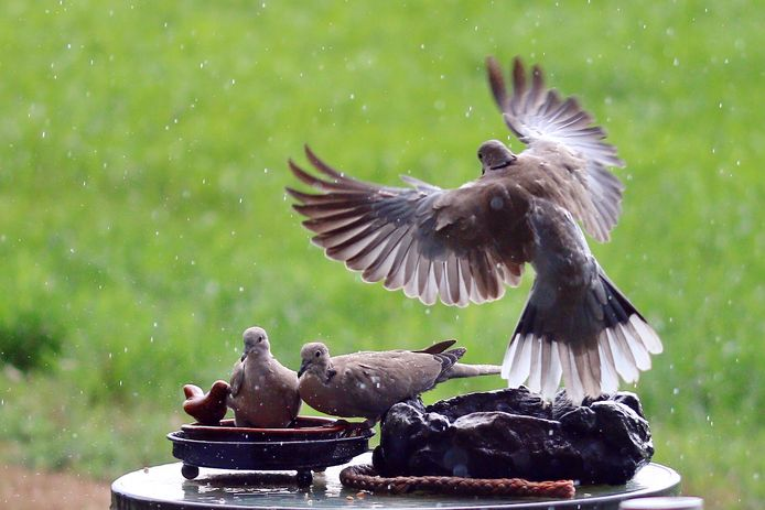 De dierenvriend was duiven aan het voeren.