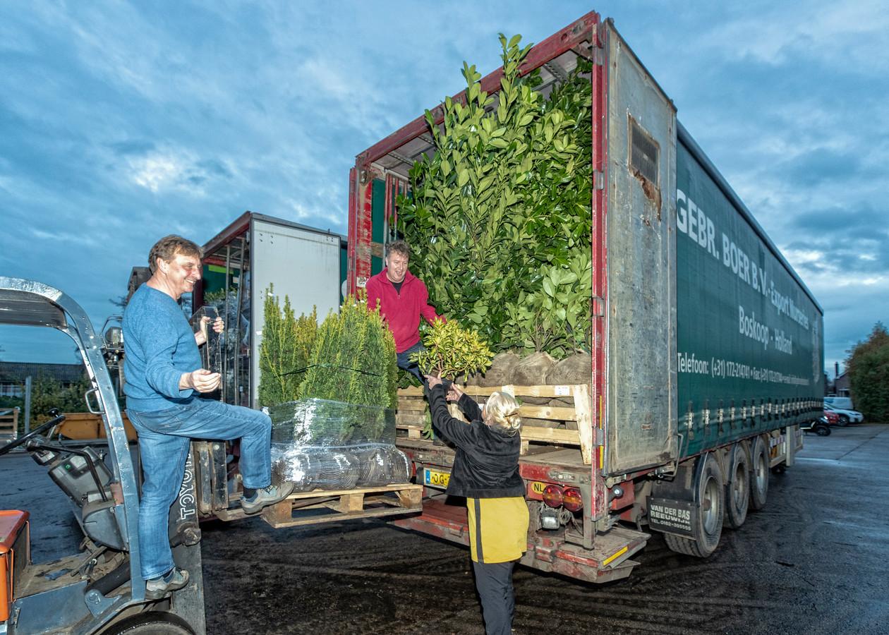 Bij de Gebroeders Boer in Boskoop is het topdrukte met inladen.