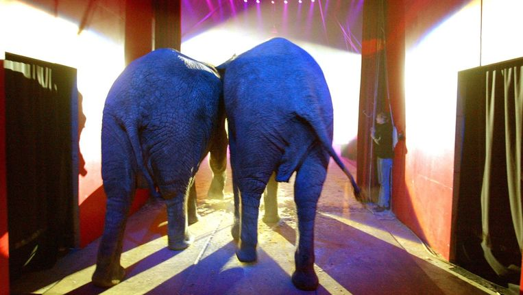 Bij ons zie je geen olifanten aan de ketting, aldus Henk van der Meijden Beeld anp
