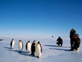 Nieuwe pinguïnkolonies ontdekt op Antarctica