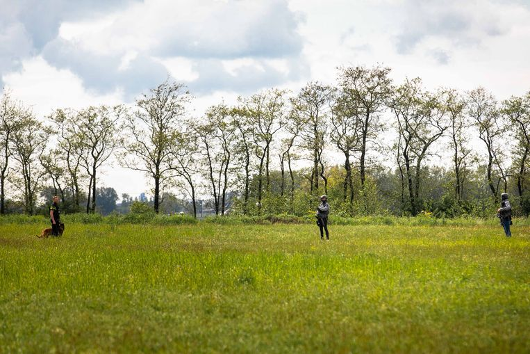 Agenten doen onderzoek in het weiland in Broek in Waterland. Beeld ANP