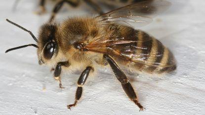 Gegidste wandeling over bijen in de stad