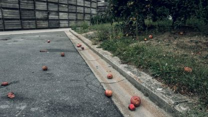 Bex Fruit, slachtoffer van een sector in zwaar weer: boeken dicht na vier generaties