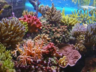 Oprukkende industrie bedreigt Great Barrier Reef