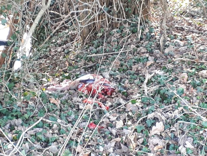 De aangetroffen resten.